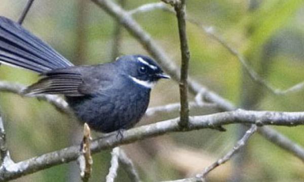 Bird Watching Around Kathmandu