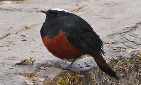 Chitwan Bird Watching